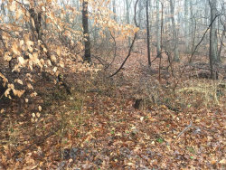 Photo of Woodhull Landing Rd, Miller Place, NY 11764 (MLS # 3189284)